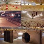 سیستمهای گرمایشی در مرغداریها